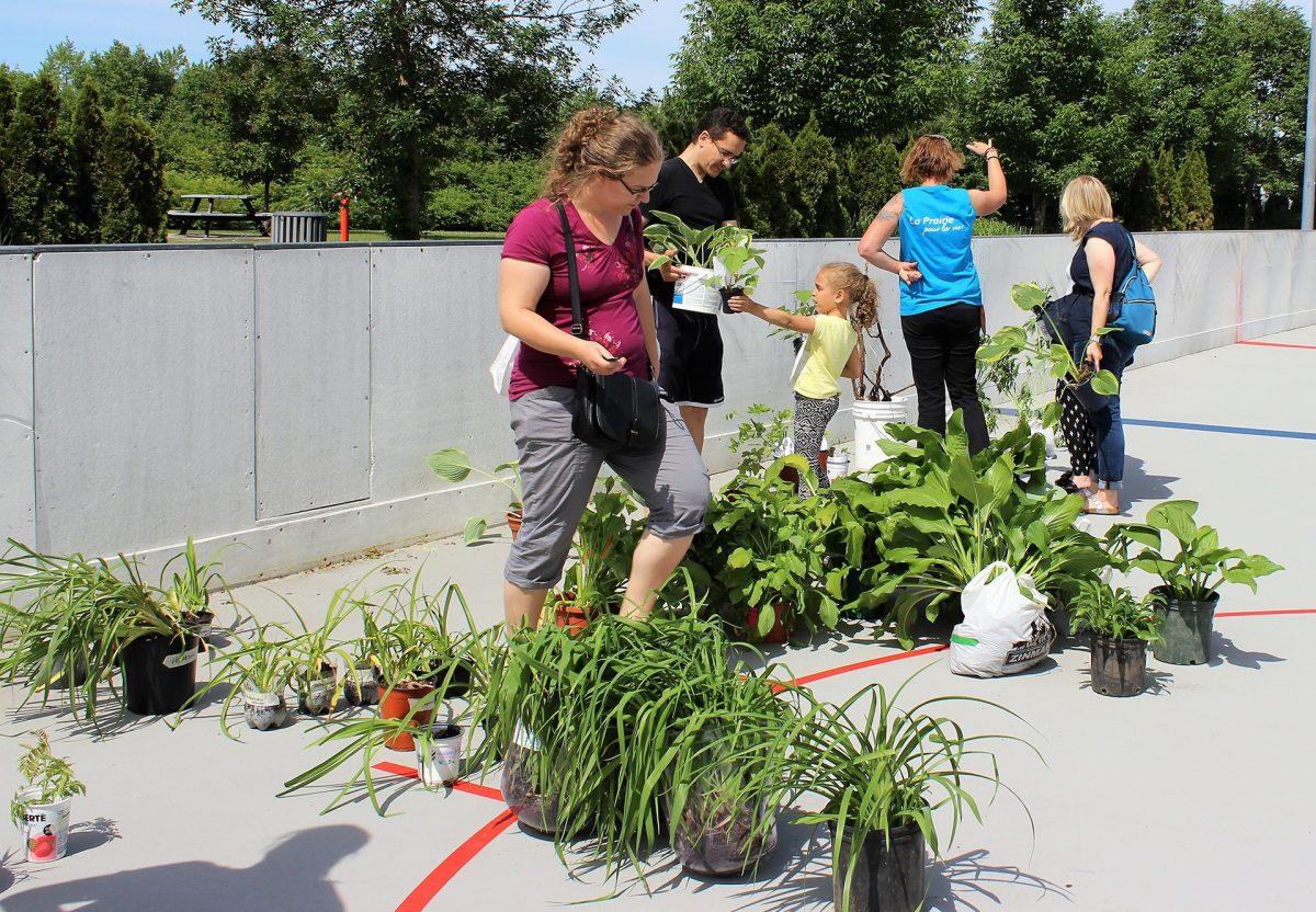 Distribution de petit jardin urbain ou d\'arbre | Ville de La Prairie